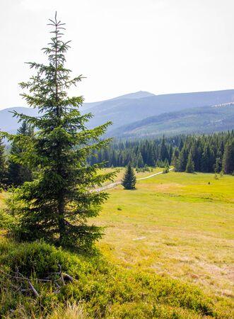 Foto de General view of the Polish Karkonosze Mountains. Mountains, trails and vegetation. - Imagen libre de derechos