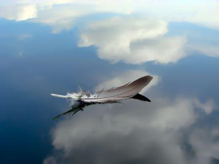 Photo pour Feather floating on the river - image libre de droit