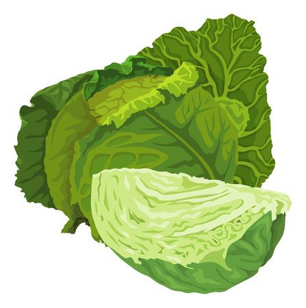 Illustration pour Illustration of raw green cabbage. - image libre de droit