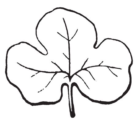 Vektor für A picture shows parted leaf, this is an example of a pinnately parted leaf. A leaf having margins incised almost to the base so as to create distinct divisions or lobes, vintage line drawing or engraving illustration. - Lizenzfreies Bild