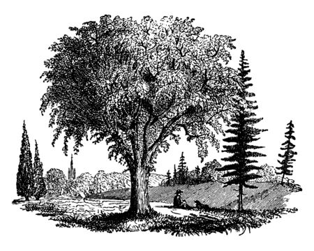 Illustration pour An orchard with many varieties of trees, vintage line drawing or engraving illustration. - image libre de droit
