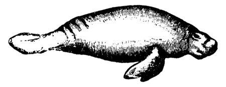 Morphart191102536
