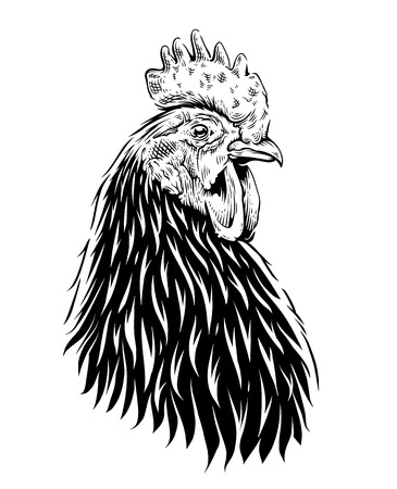 Illustration pour Vector Rooster Illustration. Engraving style cock. Retro art isolated on white. - image libre de droit