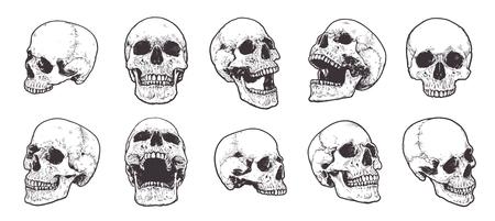 Illustration pour Hand-drawn Anatomical Skulls Vector Set. - image libre de droit