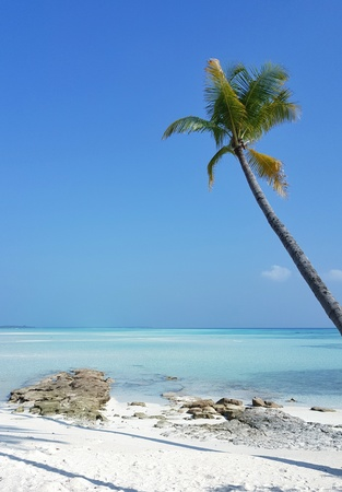 P00674 Maldives beautiful white sandy beach background with palm trees on sunny tropical paradise island with aqua blue sky sea water ocean 4k