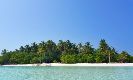 Maldives beautiful white sandy beach background with palm trees on sunny tropical paradise island with aqua blue sky sea water ocean