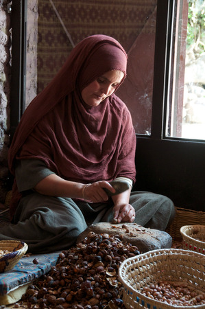 Traditional method of producing Argan oils, a Berber lady working with Argan nuts to extract the kernel in a womens cooperative in Imlil in Morocco