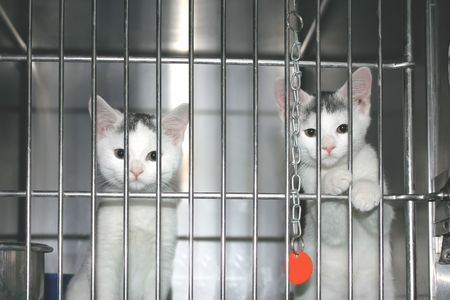 Kitties which want to be adopted