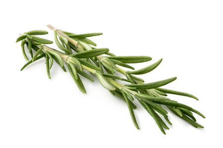 Photo for Freshly picked sprig of rosemary isolated on white. - Royalty Free Image