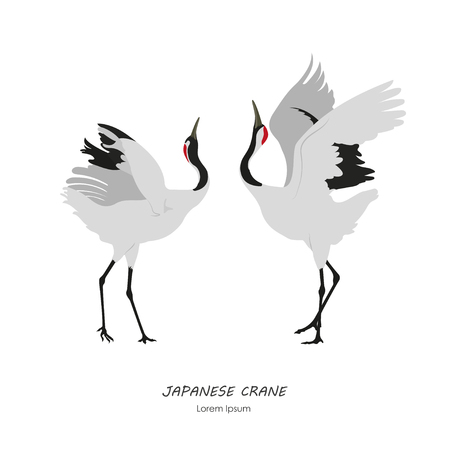 Ilustración de Two Japanese Cranes dancing on a white background. Vector illustration - Imagen libre de derechos