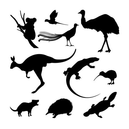 Foto de Set of black silhouettes of Australian animals. Kangaroo, koala and emu on a white background - Imagen libre de derechos