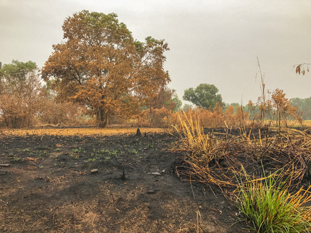 After fire burn forest become arid.dead trees