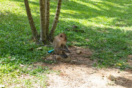 Photo pour close up of little monkey playing around at Phatthalung, Thailand - image libre de droit