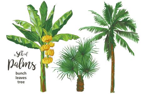 Illustration pour Tropical bananas palm trees, leaf, fruits foliage textural collection. Vintage design for banner, textile, wallpaper. Vector watercolor illustration. - image libre de droit