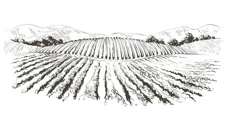 Illustration pour Vine hills landscape. Vector line sketch illustration - image libre de droit