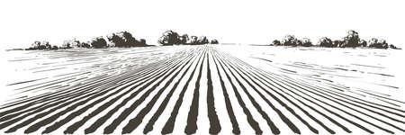 Illustration pour Vector farm field landscape. Furrows pattern in a plowed prepared for crops planting. Vintage realistic engraving sketch illustration. - image libre de droit
