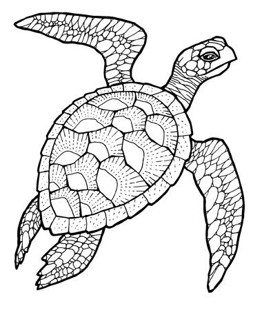 Illustration pour sea turtle - line art  vector stylized drawing - image libre de droit