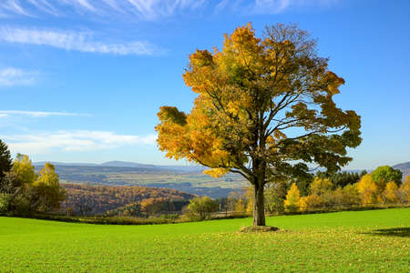 Single autumn tree on a meadow with blue colored mountain background at ore mountains germany