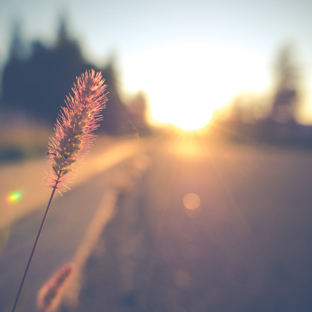 Photo for Retro Vintage Soft Focus Empty Street With Grass And Lens Flare - Royalty Free Image