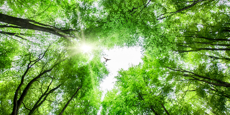 Photo pour Looking up through fresh green tree canopy to sky and sunlight with a bird soaring overhead - image libre de droit