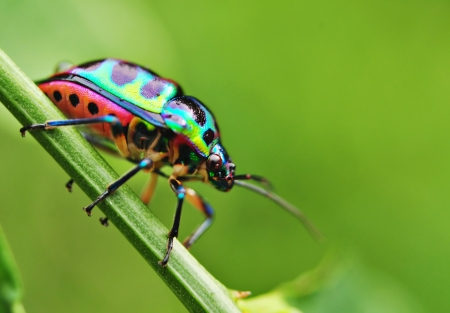 Colorful Bug Resting On Grass