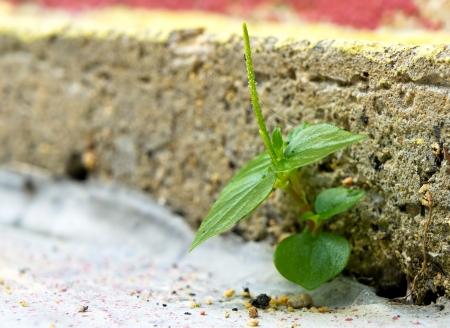 Business concept of break through brick