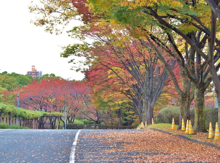 colorful tree on the walk way in Autumn at Nagoya, Japan.