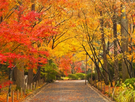 Pathway through the park in autumn