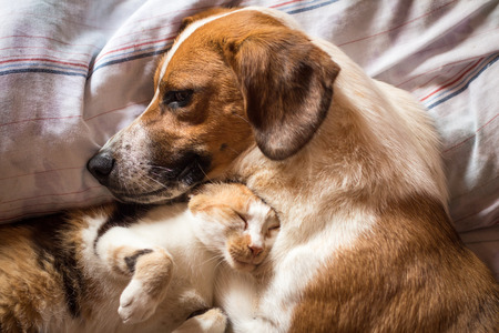 Photo pour Dog and cat wake up hugging from a nap - image libre de droit