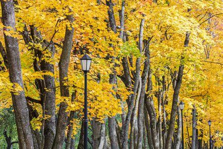 Photo pour park tree tops with bright gold foliage and black retro lanterns. closeup view - image libre de droit