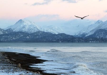 Eagle in Winter