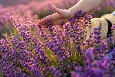 Photo pour A womans hand touches lavender, feeling nature. A woman collects lavender. Cosmetic product. The concept of appeasement, aromatherapy. - image libre de droit