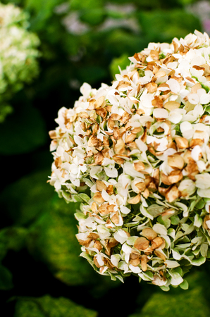 flower, white flower on a green background