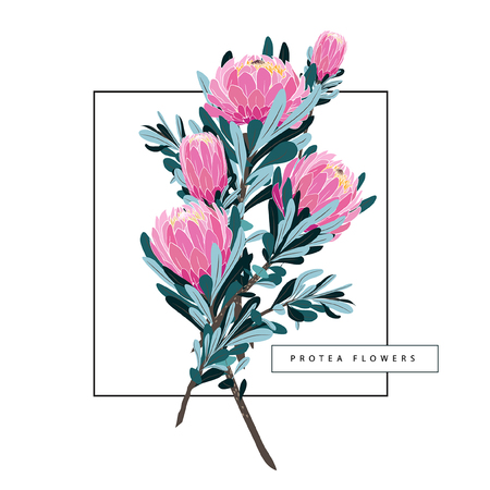 Illustration for Set of floral vintage hand drawn protea, wildflowers, leaves branches flowers, botanical hand drawn illustration isolated on light white background - Royalty Free Image