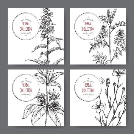 Photo pour Four labels with star anise or badiane, liquorice, Digitalis and common flax sketch. - image libre de droit