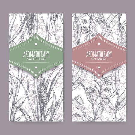 Illustration pour Two labels with Acorus calamus aka sweet flag and Alpinia galanga aka greater galangal sketch - image libre de droit