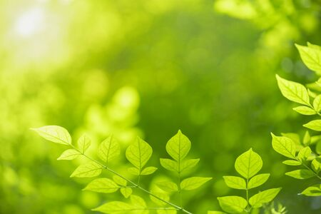 Photo pour Close up of nature view green leaf on blurred greenery background under sunlight with bokeh and copy space using as background natural plants landscape, ecology wallpaper concept. - image libre de droit