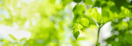 Foto de Close up of nature view green leaf on blurred greenery background under sunlight with bokeh and copy space using as background natural plants landscape, ecology cover concept. - Imagen libre de derechos