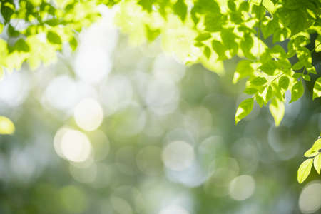Photo for Closeup of nature view of green leaf on blurred greenery background with copy space using as background natural green plants landscape, ecology, fresh wallpaper concept. - Royalty Free Image