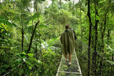 Anonymous scientiest walks on a canopy bridge in a dense tropical rain forest in Costa Rica