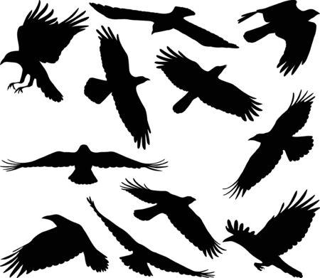 Illustration pour Flying crow silhouettes - image libre de droit