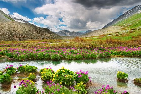 Mountain valley with blooming flowers