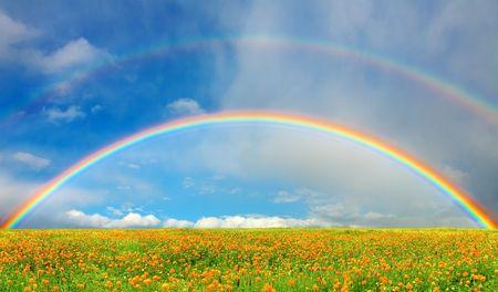 Photo pour Landscape with blossoming field and rainbow - image libre de droit