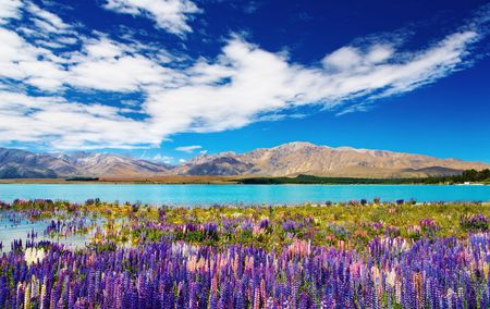 Foto de Mountain landscape with lake and flowers, New Zealand - Imagen libre de derechos