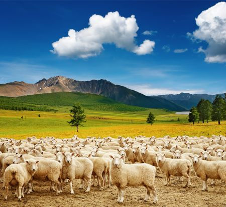 Mountain landscape with sheep and blue sky