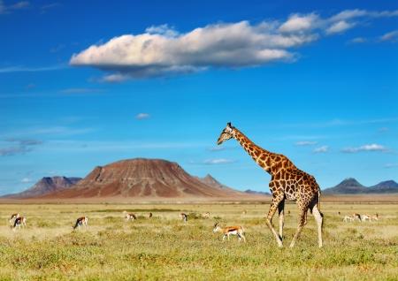 Photo pour African savanna with giraffe and grazing antelopes - image libre de droit