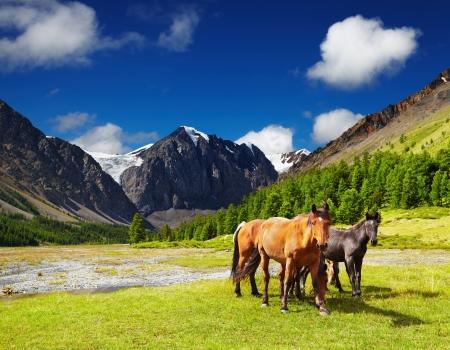 Foto de Mountain landscape with grazing horses - Imagen libre de derechos