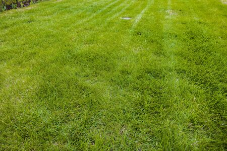 Photo pour Close up view of summer grass. Beautiful nature background / texture. Summer concept. - image libre de droit