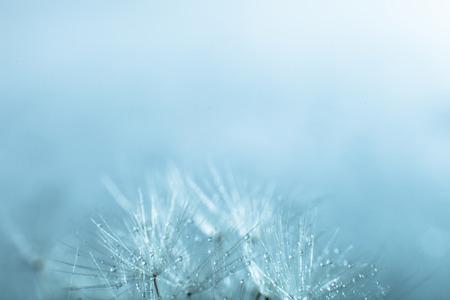 Photo pour Dandelion seed, shallow focus - image libre de droit
