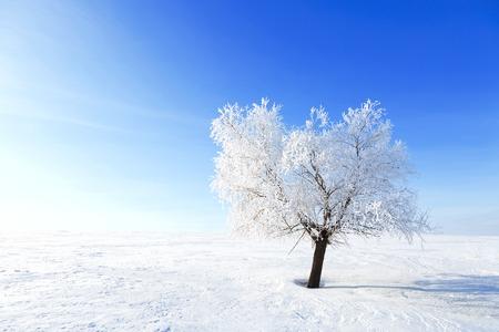 Foto de Alone Tree in the snow in a field in winter. Beautiful white winter. Blue sky. - Imagen libre de derechos